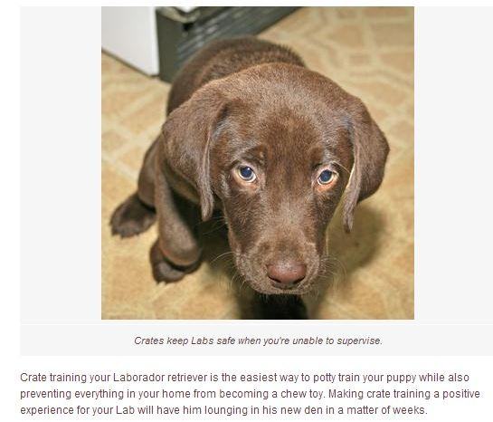 Crate-Training-your-Lab-Puppy