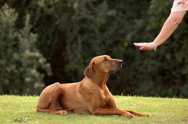 Dog-Park-Behavior-and-Etiquette-Tips