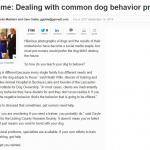 No-shame-Dealing-with-common-dog-behavior-Problems