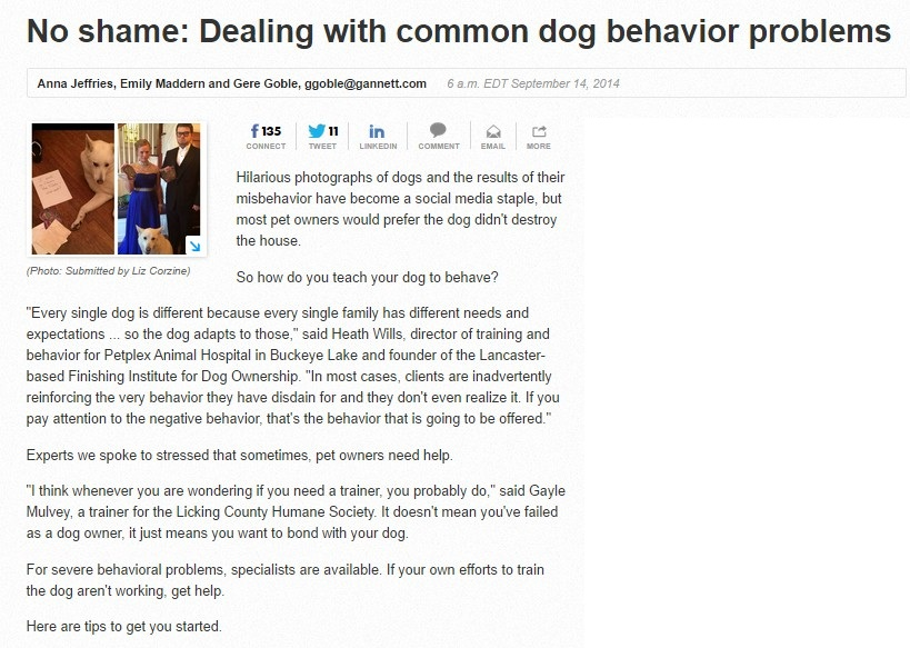 No-shame-Dealing-with-common-dog-behavior-Problems