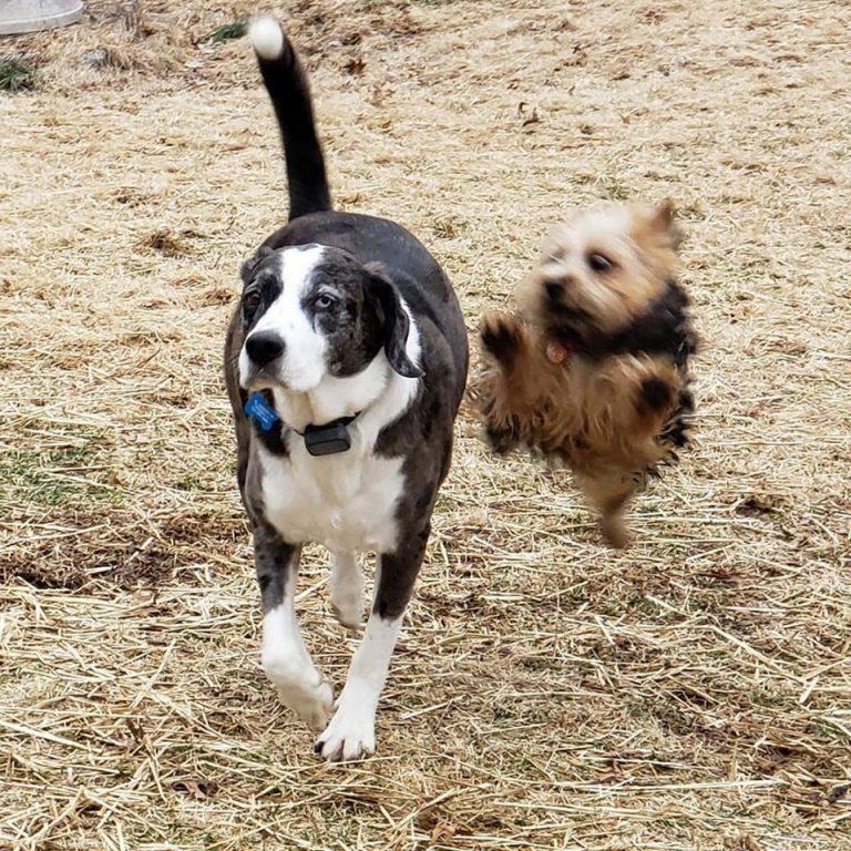 dog jumping at another dog