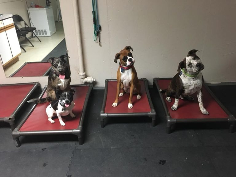 dogs on bed in place obedience