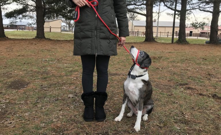 sit command with transitional leash